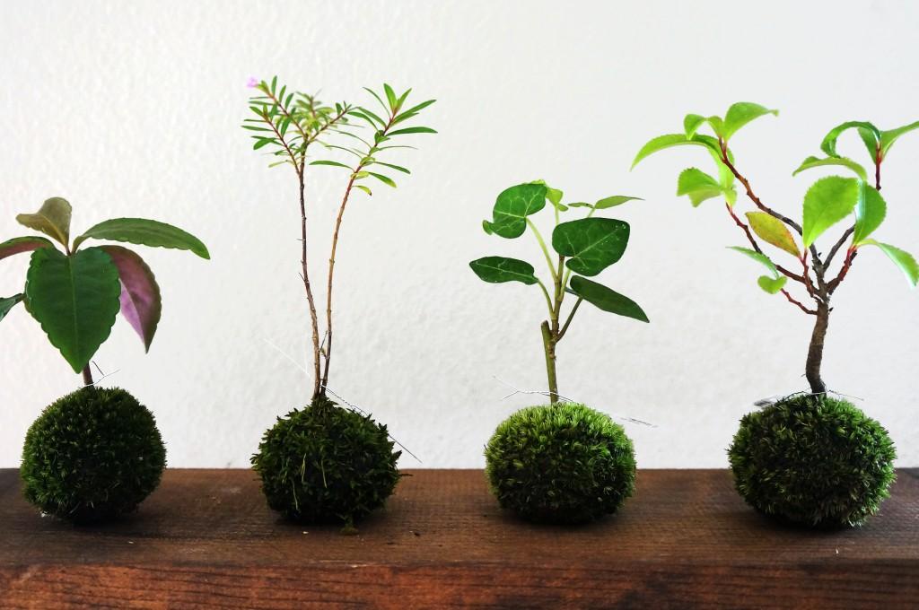 Naver for Macetas originales para el jardin